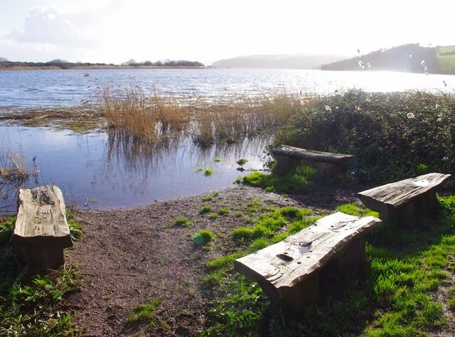 February – walk round Slapton Ley National Nature Reserve