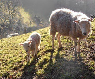 Bottte Feeding Matilda the Lamb