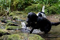 Watermill Cottages – A Dogtastic Holiday by Monty, the black lab
